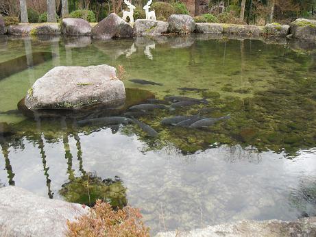 7 天好園・鯉の池