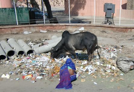 20 ゴミと牛と人