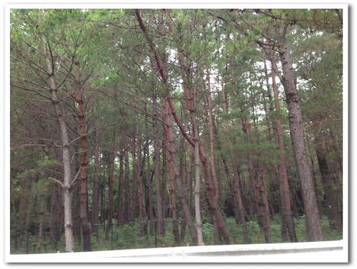 生の松原森林公園