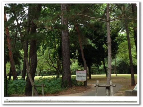 生の松原森林公園 (2)