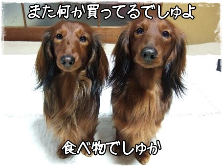 20100226-2.png