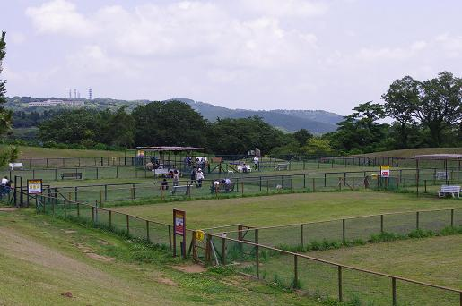 20100612-6.jpg