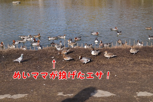 2305_20131223172608fa4.jpg