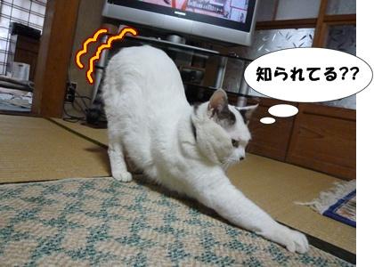 10_20100510203827.jpg