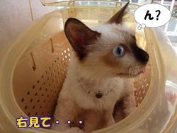 10_20101122191738.jpg