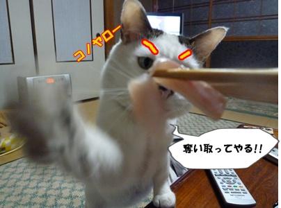 10_20110222152304.jpg