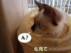 11_20101122191738.jpg