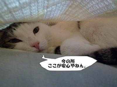 11_20110112113943.jpg