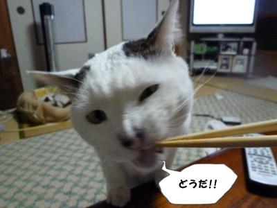 11_20110222152304.jpg