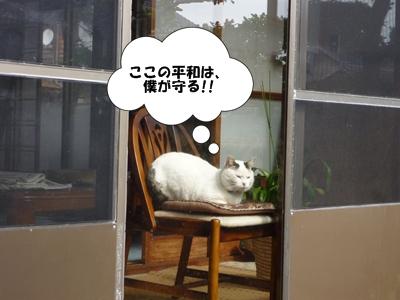11_20110503114845.jpg