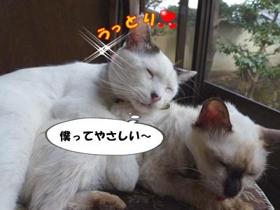 12_20101002151411.jpg