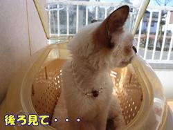 12_20101122191737.jpg
