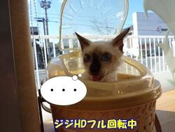 13_20101122191737.jpg