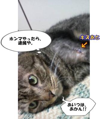 13_20110906143008.jpg