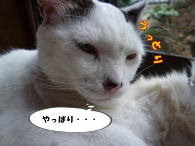 14_20101002151450.jpg