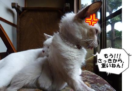 16_20101002151450.jpg