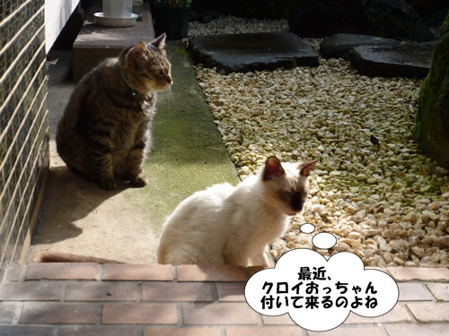 1_20100625194515.jpg