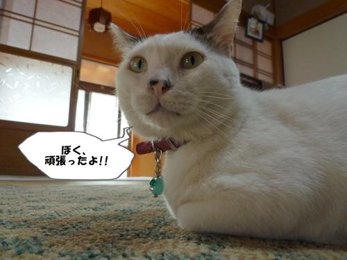 1_20101101104239.jpg