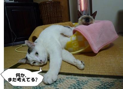 1_20110207110306.jpg