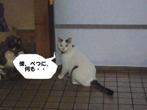2_20100715213809.jpg