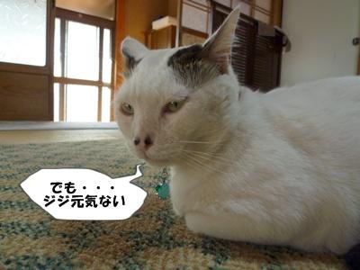 2_20101101104239.jpg