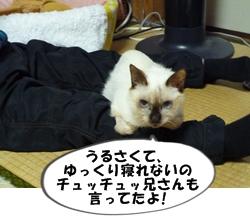 2_20110112113800.jpg