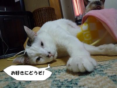 2_20110207110306.jpg