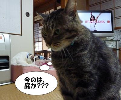 3_20100510203738.jpg