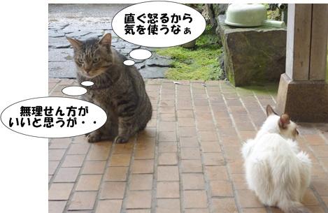 3_20100619173359.jpg