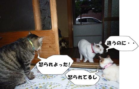 3_20100715213808.jpg