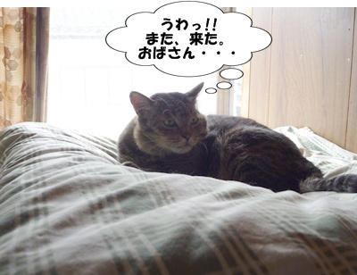 3_20100719132953.jpg