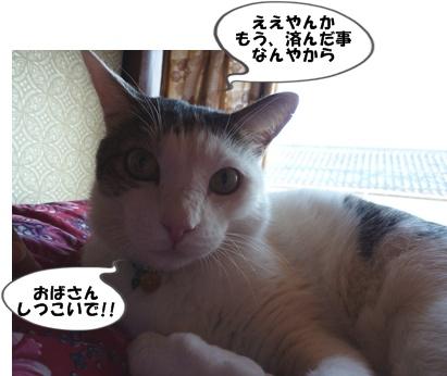 3_20101122191631.jpg