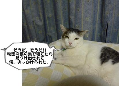 3_20110112113858.jpg