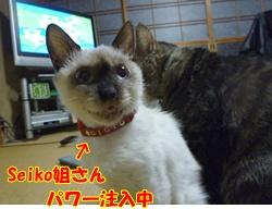 3_20110222152048.jpg