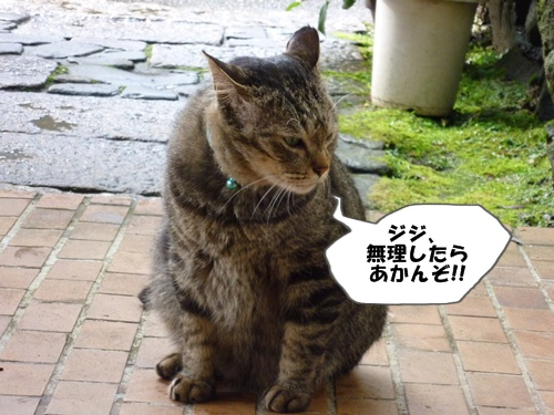4_20100619173359.jpg