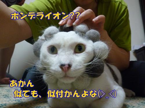 4_20100809213655.jpg