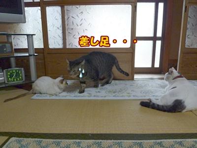 4_20101008122854.jpg