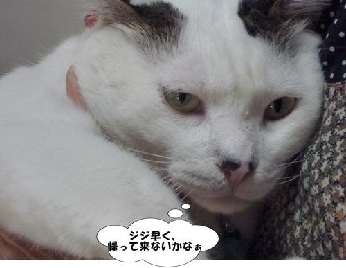 4_20101101104239.jpg