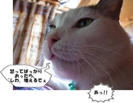 4_20101122191631.jpg
