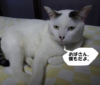4_20110112113858.jpg
