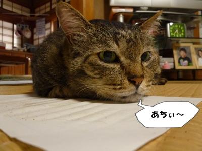 4_20110627150608.jpg