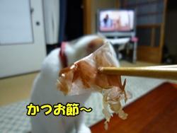 5_20100707200040.jpg
