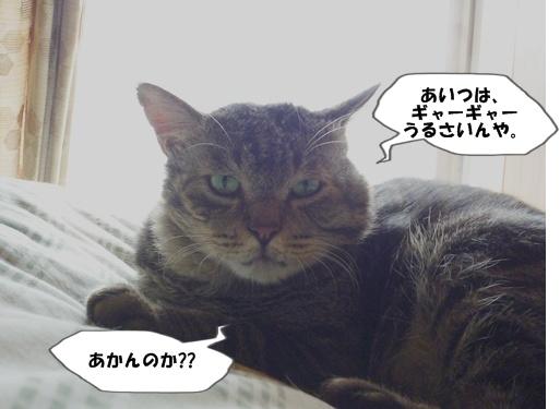 5_20100719132952.jpg