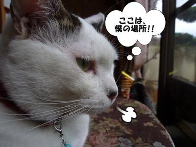 5_20101006114357.jpg