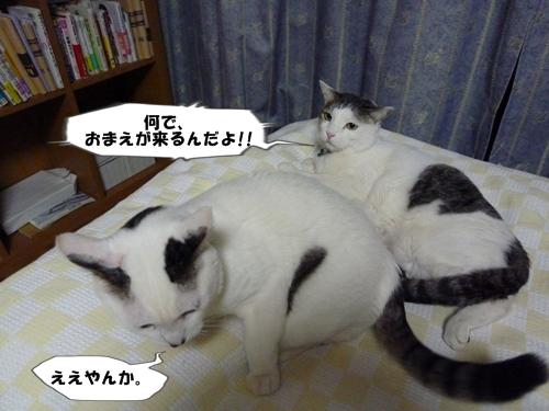 5_20110112113858.jpg