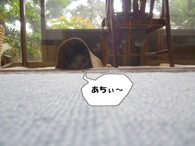 5_20110627150607.jpg