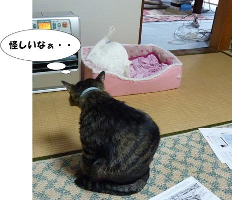 6_20100510203737.jpg