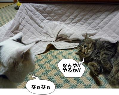 6_20100531232431.jpg