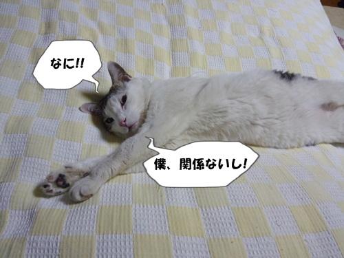 6_20100630191540.jpg