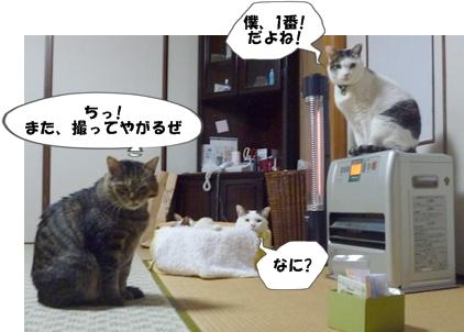 6_20110207110454.jpg